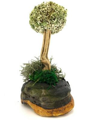 Деревце из цетрарии