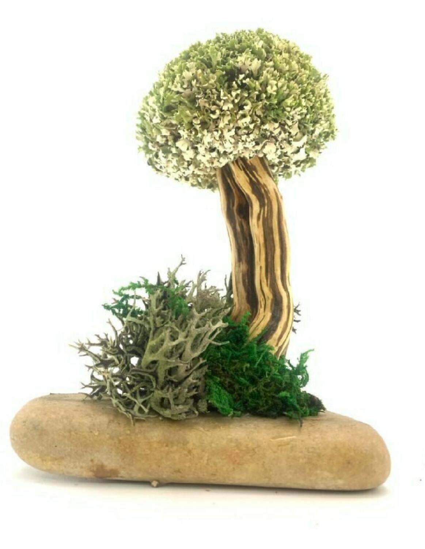 Сувенирное дерево из цетрарии