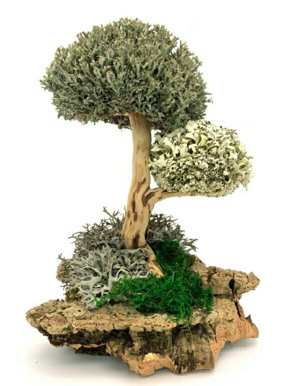 Дерево с кронами цетрарии и пармелии