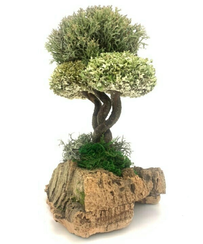 Декоративное дерево с кронами цетрарии