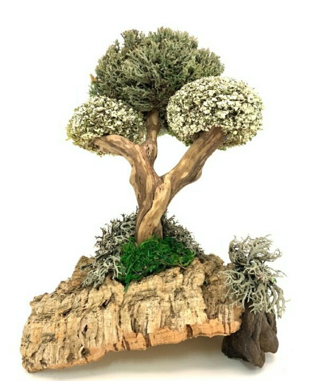 Лечебное дерево из цетрарии