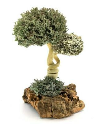 Дерево из цетрарии Лиана