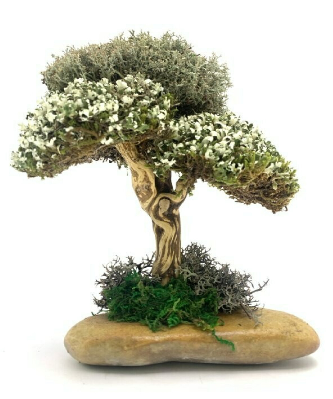 Эксклюзивное дерево из цетрарии