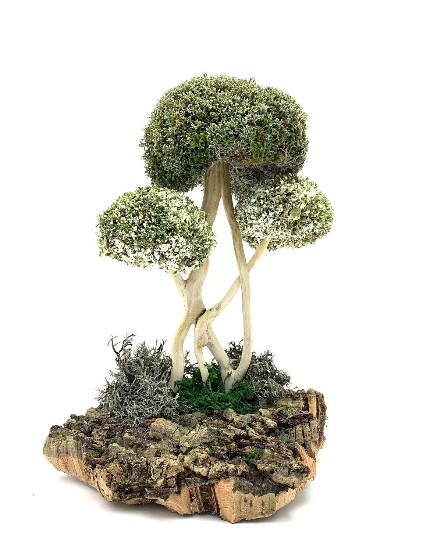 Креативное дерево с цетрарией