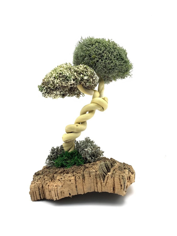 Изящная лиана — дерево с цетрарией