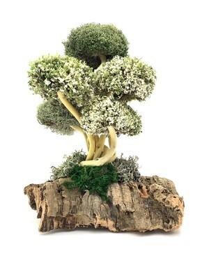 Уникальное дерево с цетрарией