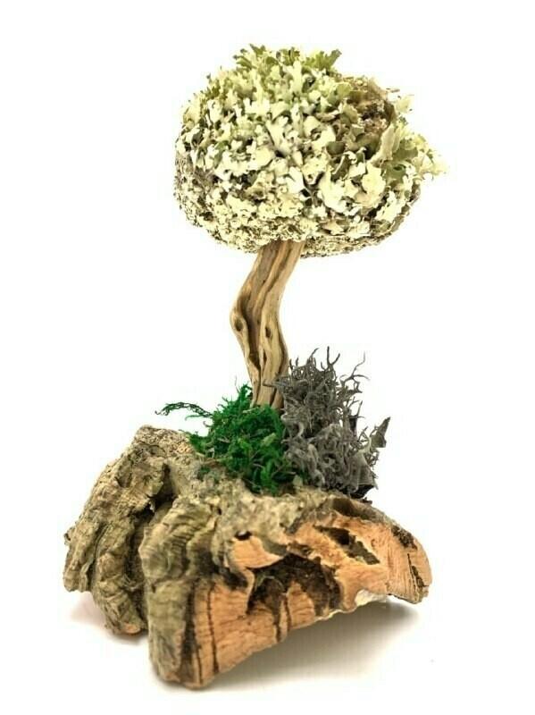 Подарочное дерево из цетрарии