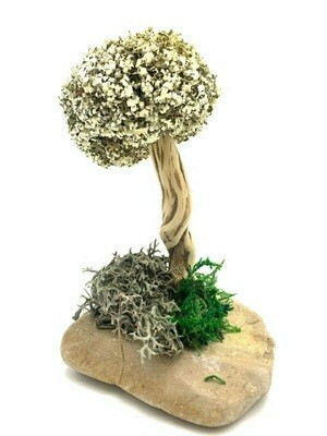 Декоративное деревце из цетрарии