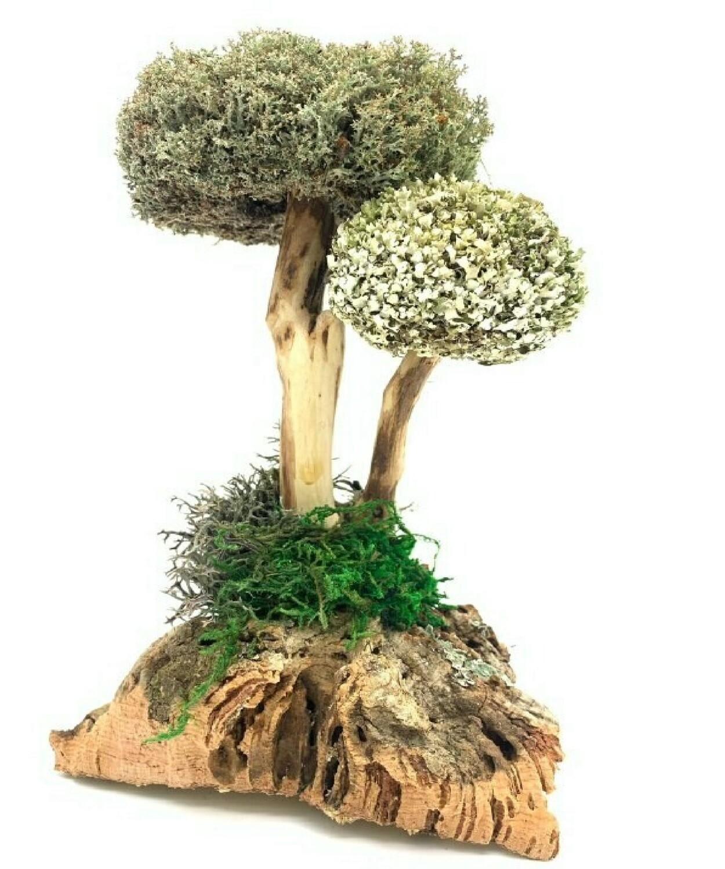 Сухоцвет цетрарии в виде деревца