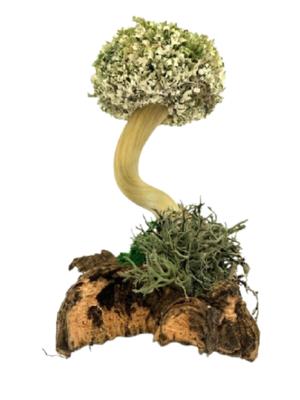 Настольное дерево из цетрарии