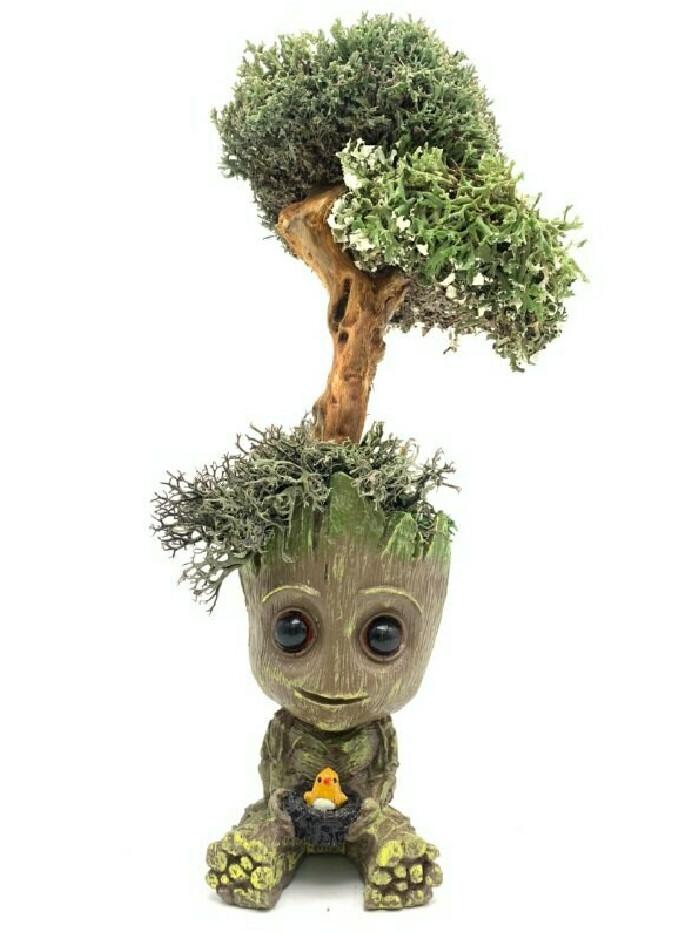Малыш Грут с деревом из цетрарии