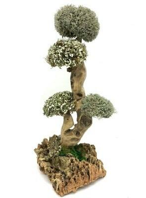 Дерево с кронами из целебной цетрарии