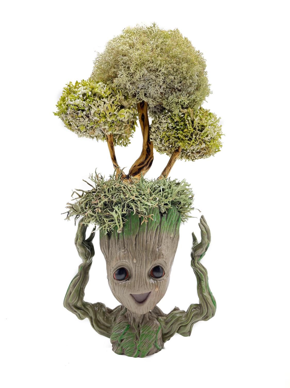 Грут с пышным деревцем из цетрарии