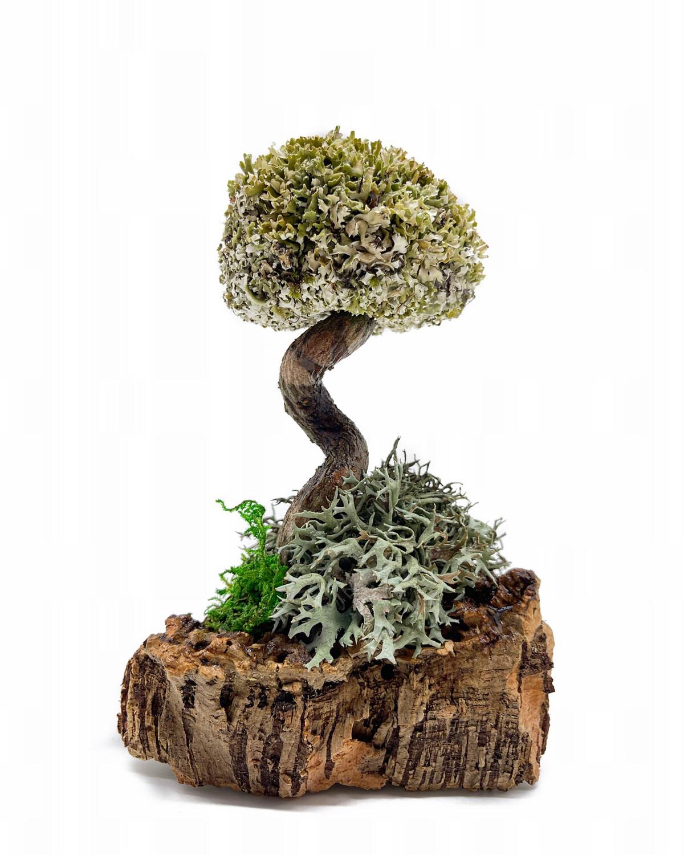 Дерево с одной кроной из цетрарии