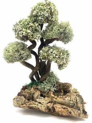 Живые деревья с кронами цетрарии