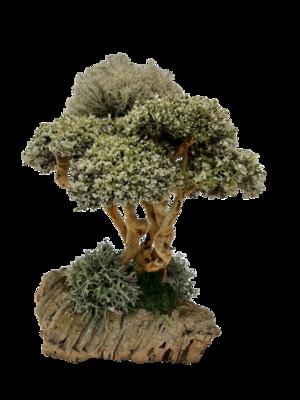 Живое дерево с цетрарией