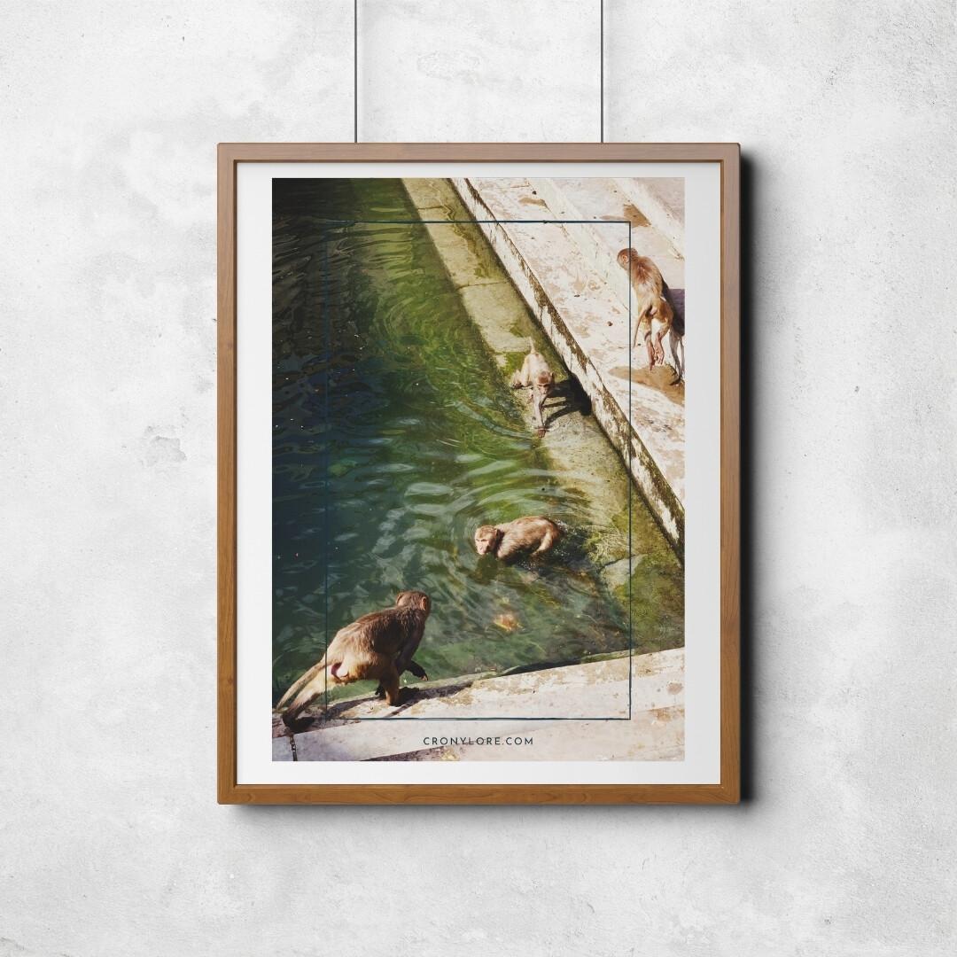 Monkeys (Poster Edition 2021/1)