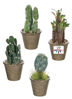 Potted Cactus - Brown & Green - Small - 7