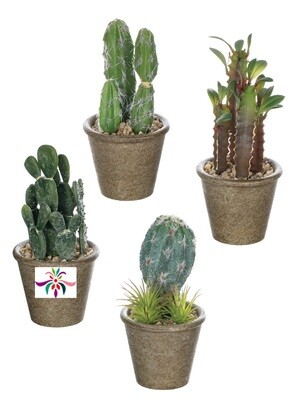 Potted Cactus - Dark Green - Small - 6.5