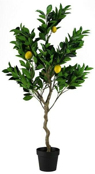 "Lemon Tree - 48""H"