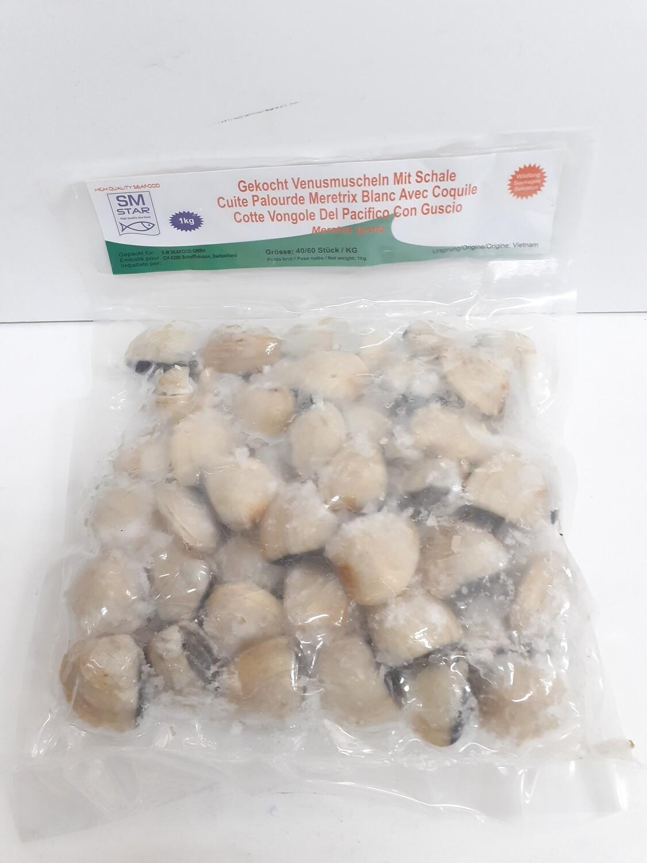 Cuite Palourde Meretrix Blanc avec Coquile 1 Kg