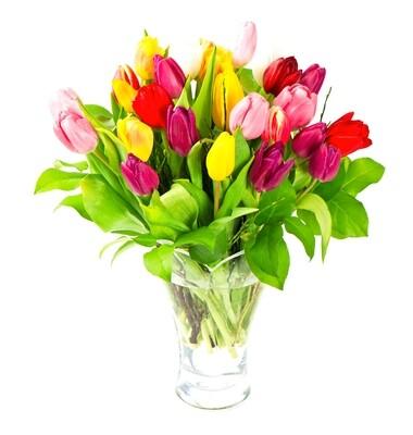 Amorous Tulips