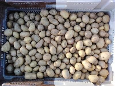 Pomme de terre Grenaille (au kg)