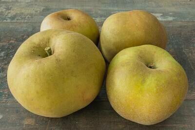 x Pomme à cuire, Canada grise, (au kg)
