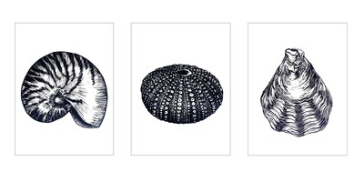 """Original Limited Edition Hand printed Lino """"Sea Shell Collection"""""""