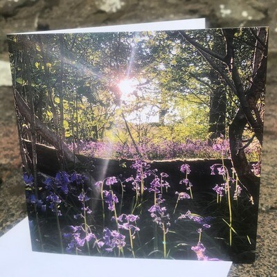 'Strickley Bluebells' Blank Greetings Card