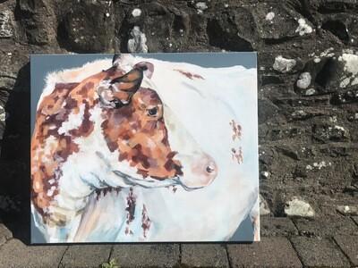 Strickley Geri - Dairy Shorthorn