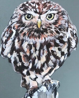 'Little Owl'