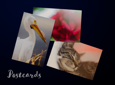 Postcards - pack of 5