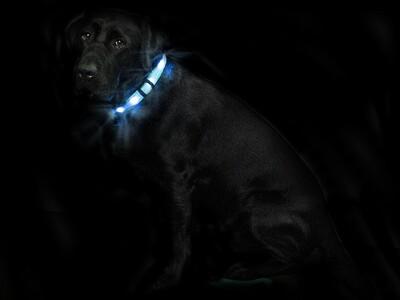 Leucht Hundehalsband Cash