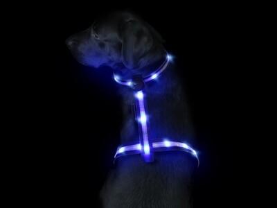 Leucht-Hundegeschirr Ninja