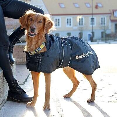 Hunde Standardmantel
