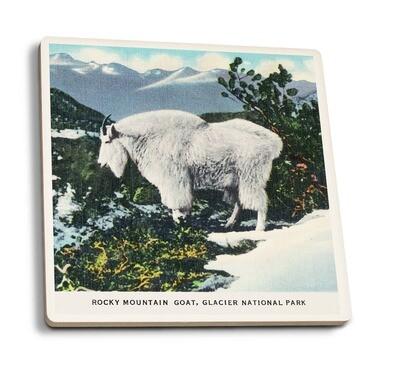 Glacier NP Coaster - Rocky Mountain Goat Montana