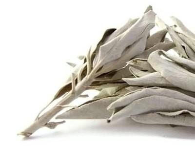 White Ceremonial Sage