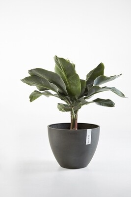 Ecopots Antwerp 50 Dark Grey