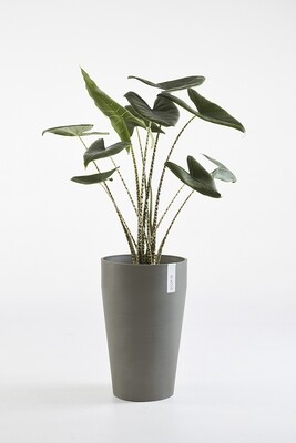 Ecopots Sankara Mid High Grey