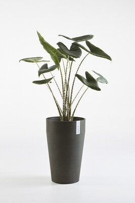 Ecopots Sankara Mid High Dark Grey