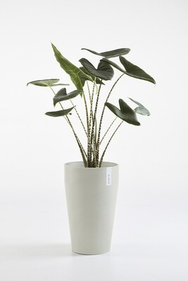 Ecopots Sankara Mid High White Grey