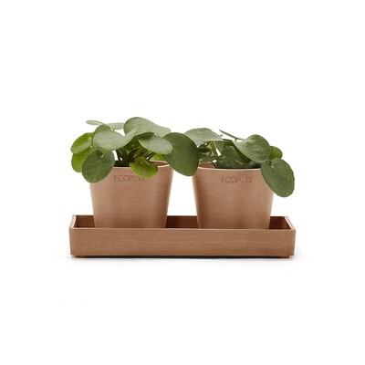 Ecopots Display Platter Amsterdam Mini 20 Terracotta