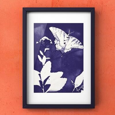 Original Swallowtail Cyanotype