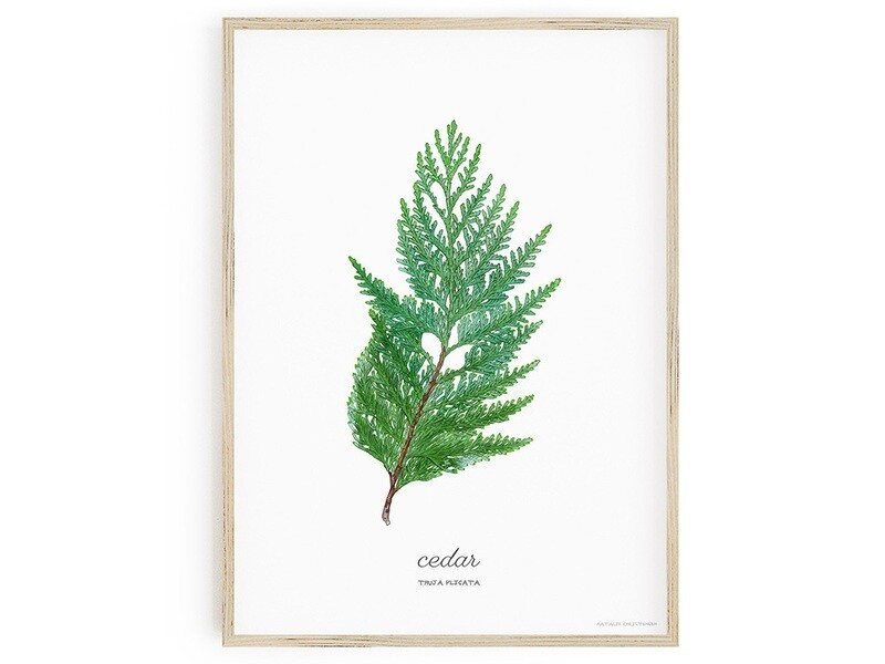 Cedar Download