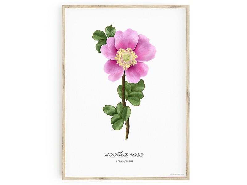 Nootka Rose Download