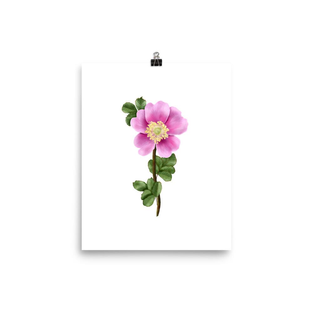 Nookta Rose Print