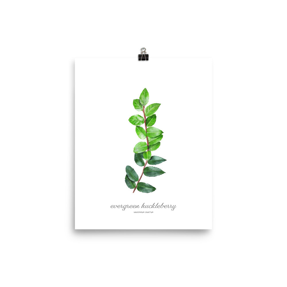 Evergreen Huckleberry Print, Titled