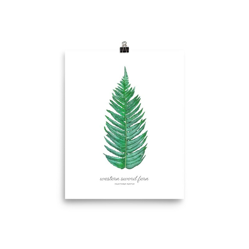 Sword Fern Print, Titled