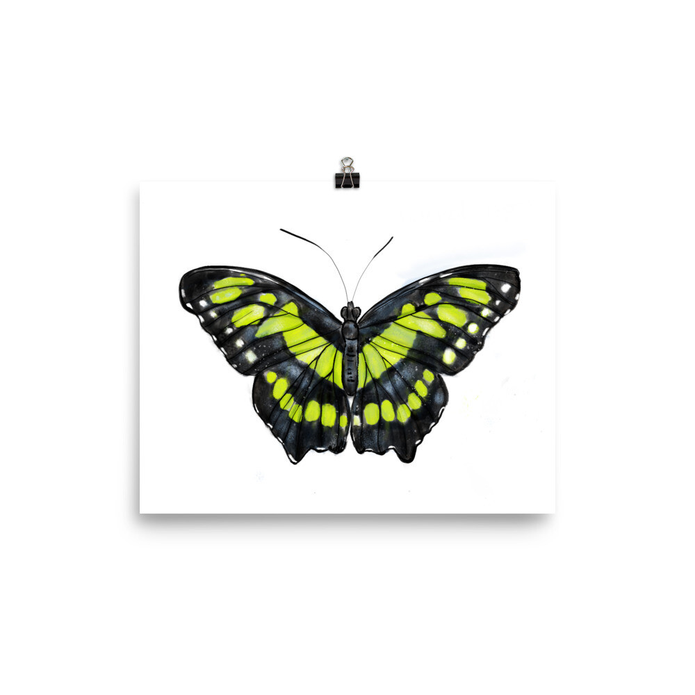Green Butterfly, Siproeta Stelenes, Print